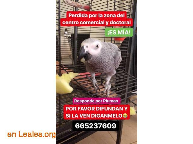 PERDIDA VECINDARIO- DOCTORAL Y CC